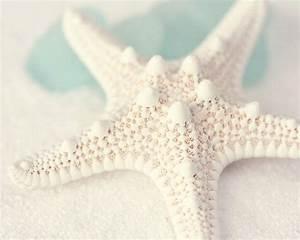 Beach Glass Photography - Sea Life Photograph - Starfish