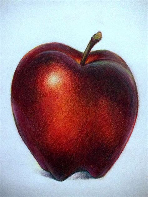 lauren yurkovich colored pencil  life drawing