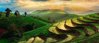 Pai Thailand Mai Chiang Guide Rice Field