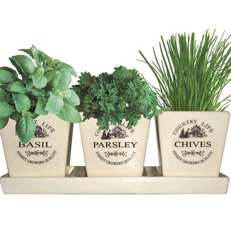 buy gift set ceramic windowsill herb gift set delivery