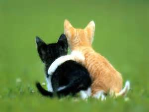 friends of cats the book whisperer meditations on friendship