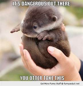 cute funny pics of animals | cute baby otter animal ...