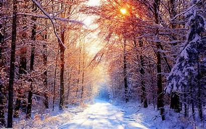 Winter Backgrounds Scenery Wallpapers Iphone Forest