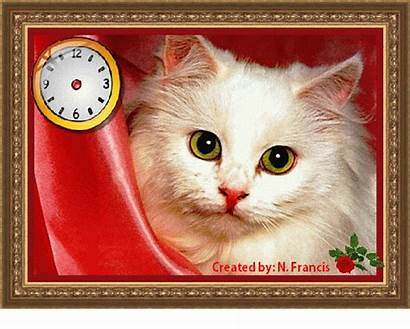 Care Take Animated Cards Card Funny Cat