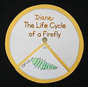 Firefly Life Cycle Diagram