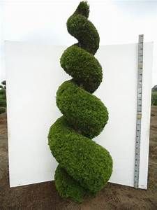 Buchsbaum Rund Schneiden : gartenpflanzen in exklusiven formen b r figuren wie reiter golfer elch etc fragen ~ Frokenaadalensverden.com Haus und Dekorationen