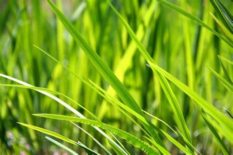 Gräser Im Garten In Szene Setzen Kompetenzzentrumiembde