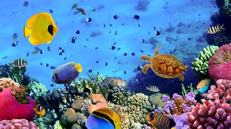 Animated Coral Reef Wallpaper - animated coral reef wallpaper wallpapersafari