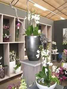 Orchideen Im Glas : orchideen im glas kaufen g nstige k che mit e ger ten ~ A.2002-acura-tl-radio.info Haus und Dekorationen