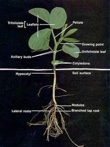 Soybean Yield Barriers