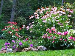 Image result for perennial beds