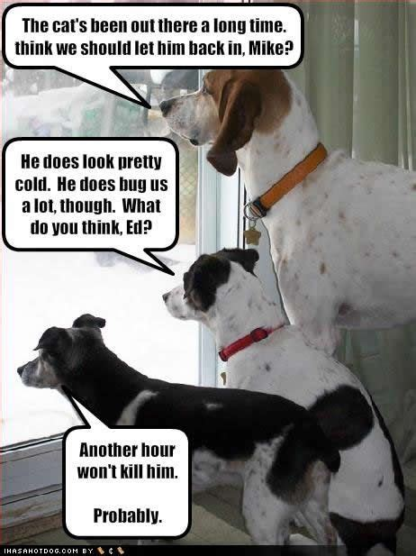 funny dog pictures  captions bing images dog