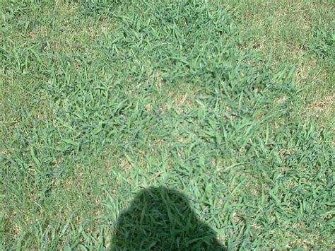 Weed Control For Bermuda Grass Lawn ? (spring