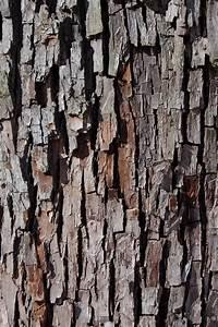 Naturholzplatte Mit Rinde : file speierling rinde jpg wikimedia commons ~ Markanthonyermac.com Haus und Dekorationen