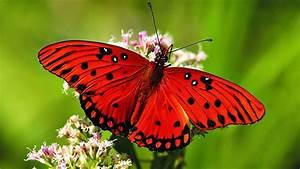 Hd, Butterfly, Wallpapers