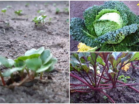 Garten Im Herbst Was Tun by Die Garten Checkliste F 252 R Den Herbst Eat Smarter