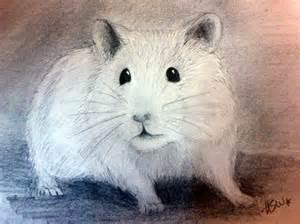 Cute Hamster Drawing Realistic