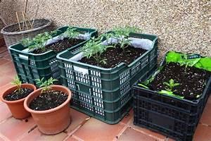 Un huerto en casa para sembrar con los ninos nutricion y for 5 cultivos faciles para empezar un huerto en casa