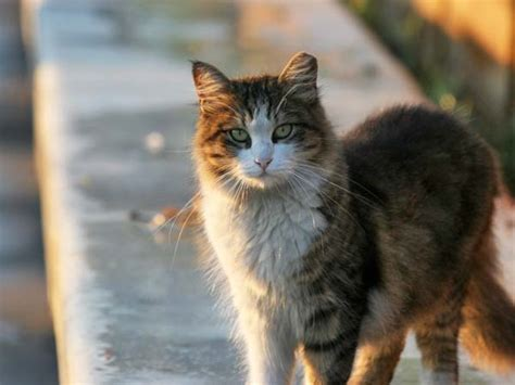 It's National Feral Cat Day  Cats Herd You