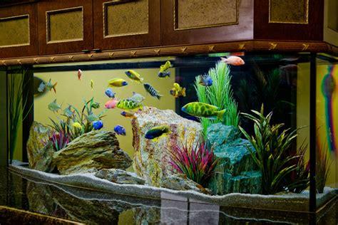 Home Aquarium Design Ideas by 27 Cool Aquariums For Your Home