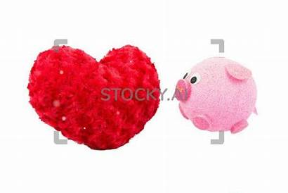 Valentine Pig Roses Pillow Heart Magical Stocky