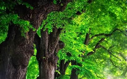 Trees Desktop 4k Wallpapers