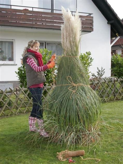 Gräser Im Garten Winterfest Machen by Pasgras Pflanzzeit