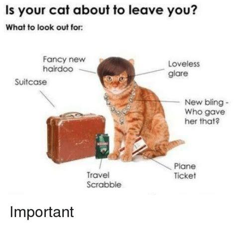 Fancy Cat Meme - 25 best memes about bling bling memes