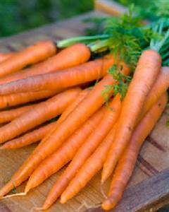 History Of The Carrot