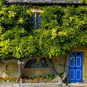 Zaun Begrünen Immergrün by Kletterpflanzen Begr 252 Nen Als Sichtschutz Balkon Und