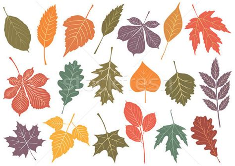 Vector Illustration Set Of 19 Autumn Leaves Vector