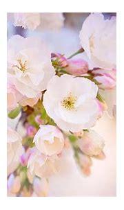 Wallpaper Beautiful Spring Desktop   2021 Cute Wallpapers