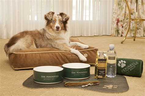 pet friendly hotels in america for puppies kittens and