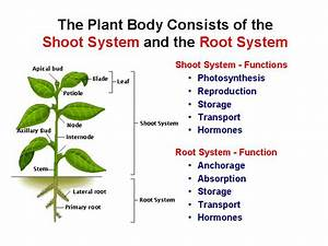 Baby Plant Project  Plant Structure And Function