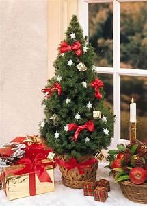 Christrose Im Zimmer : stimmungsvolle weihnachtsdekoration f r den advent planungswelten ~ Buech-reservation.com Haus und Dekorationen