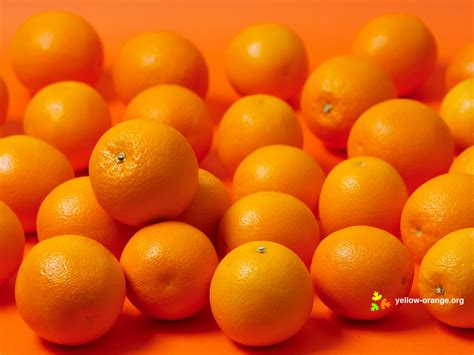 Orange Fruit Wallpaper by Oranges Wallpaper 1600x1200 184234 Wallpaperup