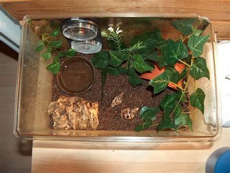 einrichtung schneckenterrarium schnecken terrarium