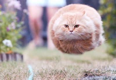 funny cats   speeding bullet