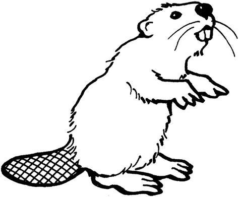beaver clip art clipartsco