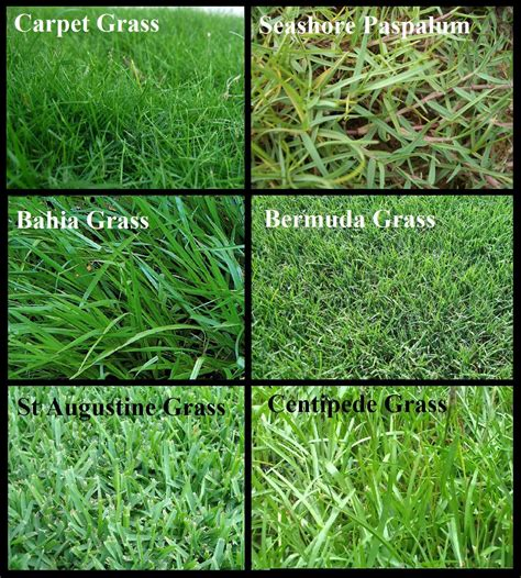 types of lawns lawn grass types texas decor references