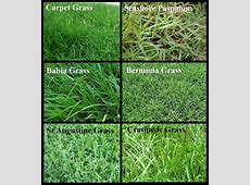 Lawn Grass Types Texas – Decor References