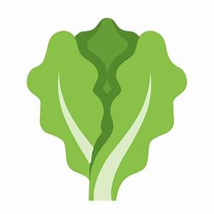 Lettuce Icon - Free Download at Icons8