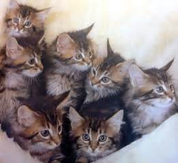 baby cats for baby cats by madara1111 on deviantart