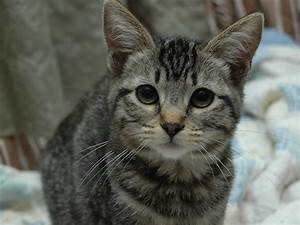 wallpapers: Hunting Cat Wallpapers