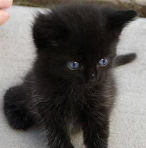 Black Kitten | Weird_Aunt_Martha | Flickr