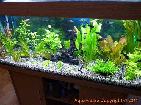 d 233 coration aquarium maison
