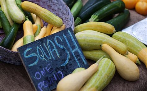 squash vegetable 10 summer squash varieties some you know some you don t modern farmer