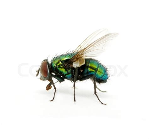gruene fliegen stockfoto colourbox