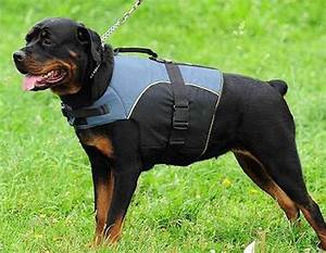 Top 10 most dangerous dogs in the world for Rottweiler dangerous dog