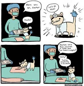 the cat doctor doctor cat 4 doctor cat